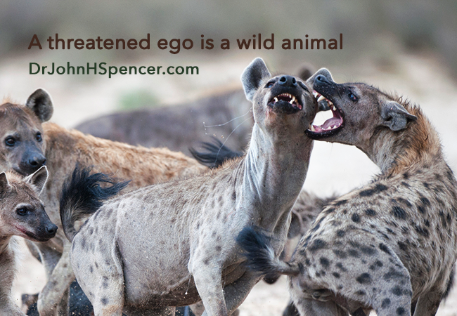 a-threatened-ego-is-a-wild-animal-banner